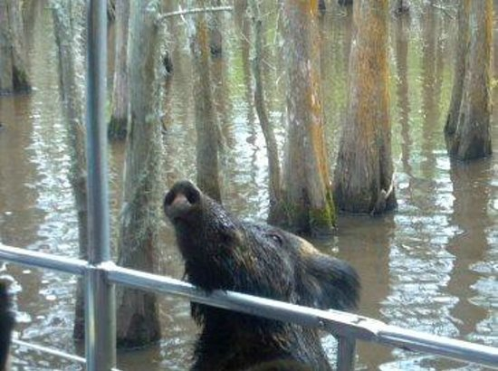 Swamp Life - Picture of Cajun Encounters, New Orleans