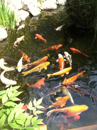 Koi pond picture of the gardens of the world thousand for Garden state koi