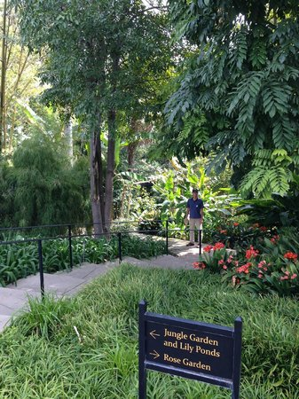 Jungle Garden At Huntington Library Picture Of The Huntington Library Art Collections And