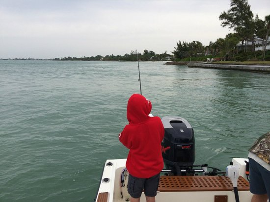 Blue fish picture of siesta key fishing charters siesta for Siesta key fishing report