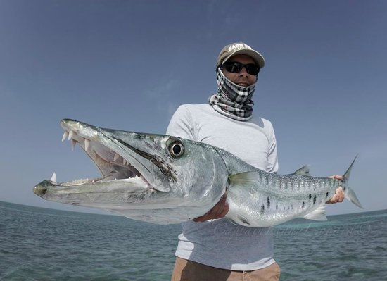 good size barracuda picture of bonefishing key west