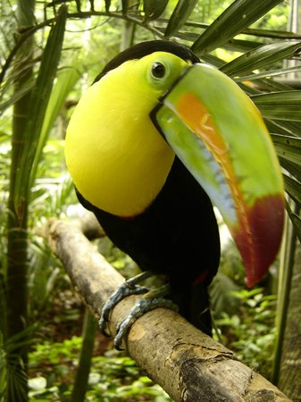 Issys Tours Costa Rica - Private Tours