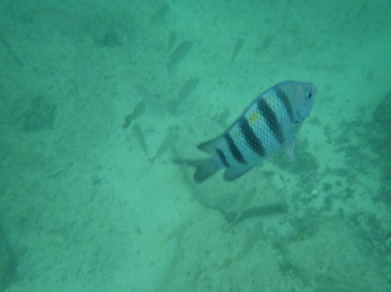 Occidental Grand Cozumel: Fish can be seen right in the swimming area