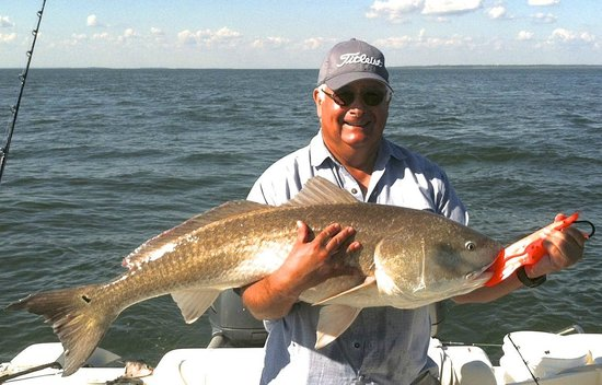Big cobia picture of sweet pea fishing charters hilton for Red fish hilton head sc
