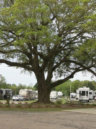 Photo of Pensacola Rv Park