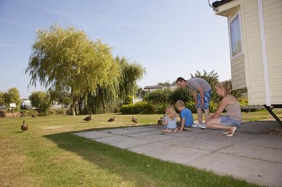 Feeding The Ducks Picture Of Southview Leisure Park Park Resorts Skegness Tripadvisor