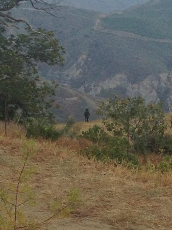 Canar, Spain: Lone Horse Seen from the Terrace