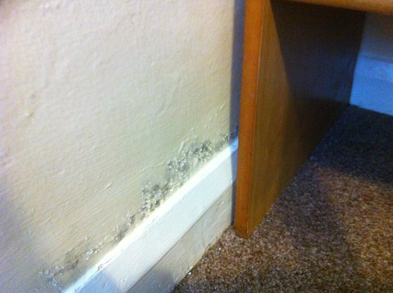 the ilfracombe holiday park mold on the walls in the kids bedroom