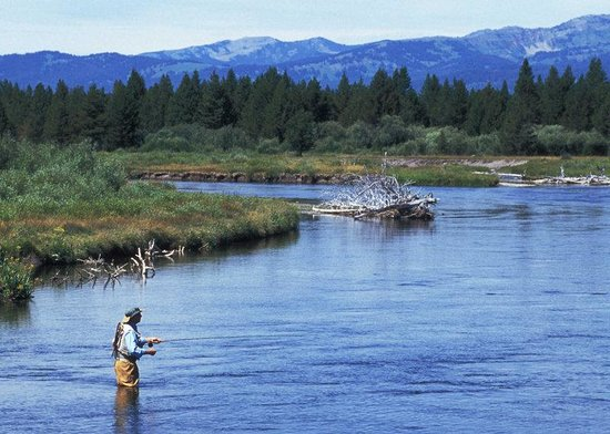 Fly fishing madison river picture of holiday inn west for Yellowstone lake fishing