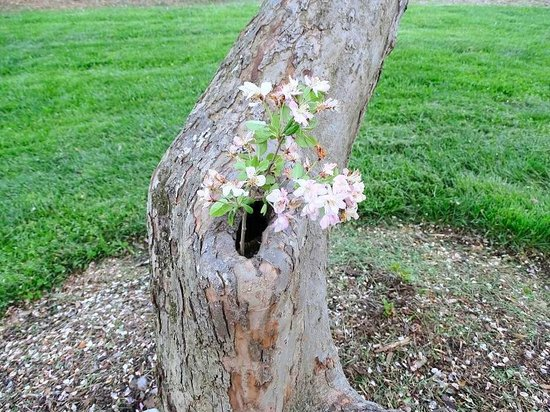 The Greensboro Arboretum: flowers growing in knot hole of tree