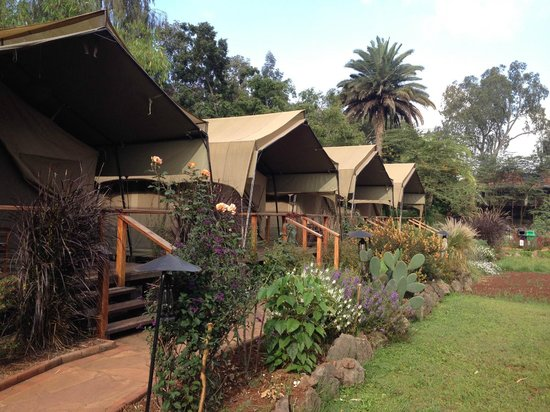 Wildebeest Eco Camp: Walkway towards the main building