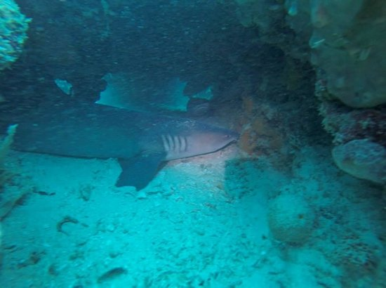 how to catch cave shark