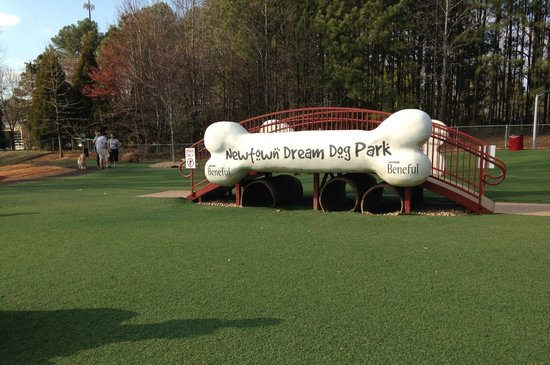 Indoor Dog Park Roswell Ga