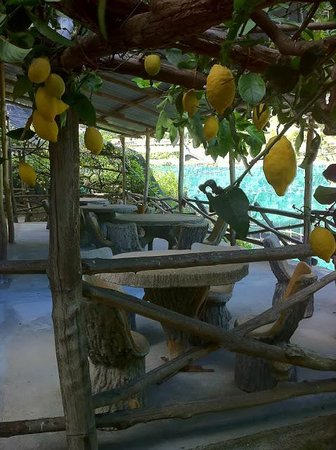 Lemon Tour Amalfi- day tours