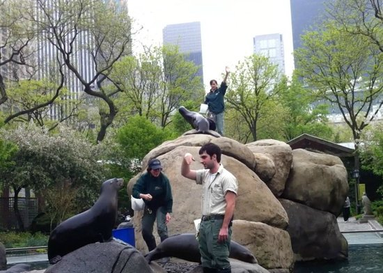 Central Park Zoo Nyc Reviews Central Park Zoo