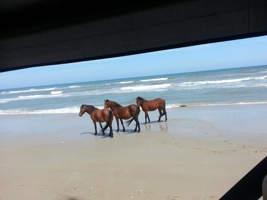 Wild Horse Tours Corolla Nc Reviews