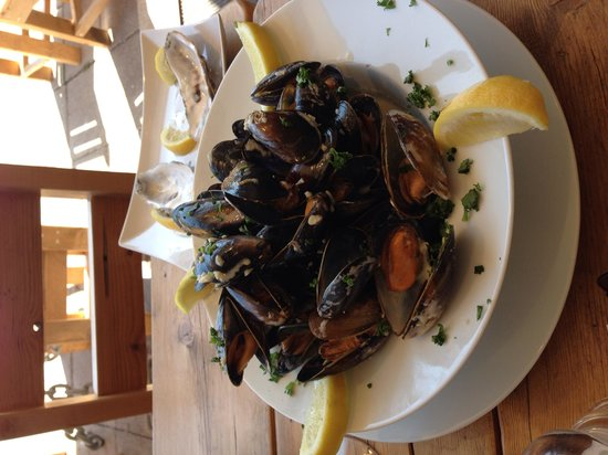 Claws Indoors: Mussels galore!
