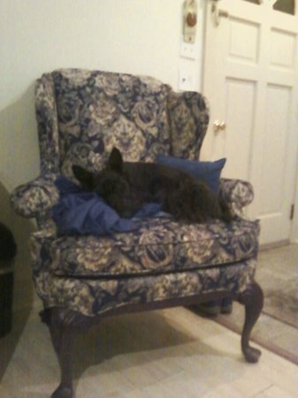 Shaker Mill Inn: My dog William resting on the Queen Anne chair