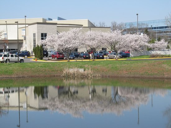 Extended Stay America - Washington, D.C. - Chantilly: Cherry trees and pond