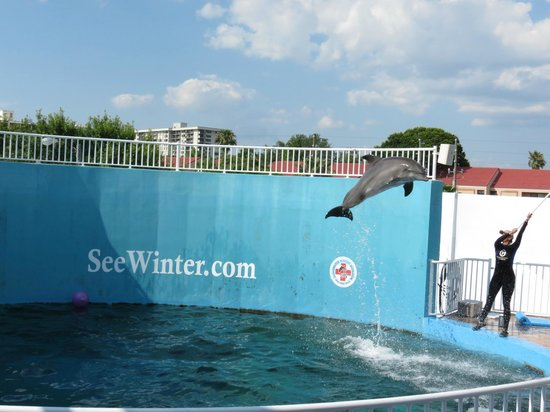 Nicholas The Dolphin Picture Of Clearwater Marine Aquarium Clearwater Tripadvisor