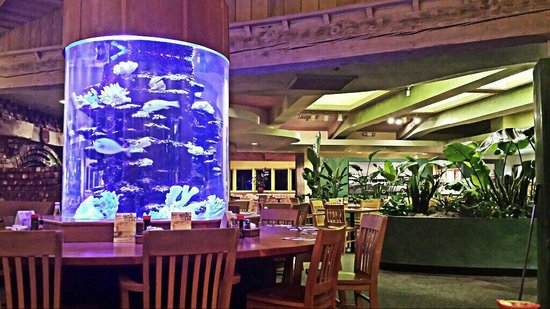 Tank dining images - Fish tank dining room table ...