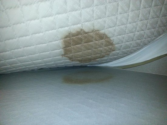 Crystal Beach Hotel: what is this under the mattress?!?