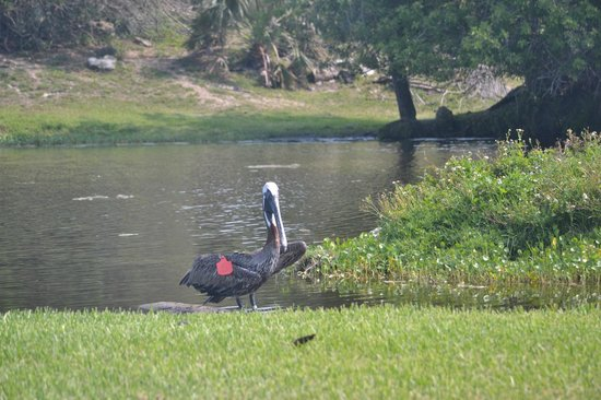monkey business - Picture of Loxahatchee, Florida