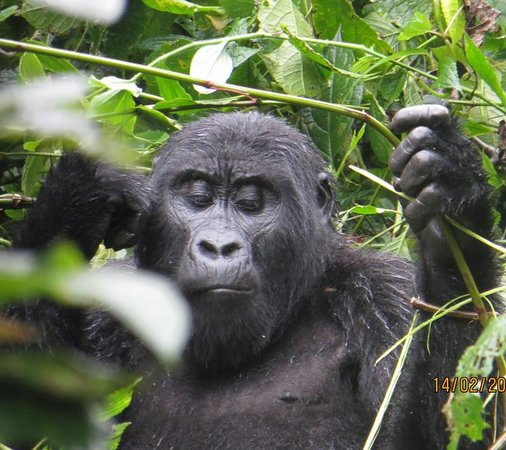 Gorilla Trek Africa - Day Tours