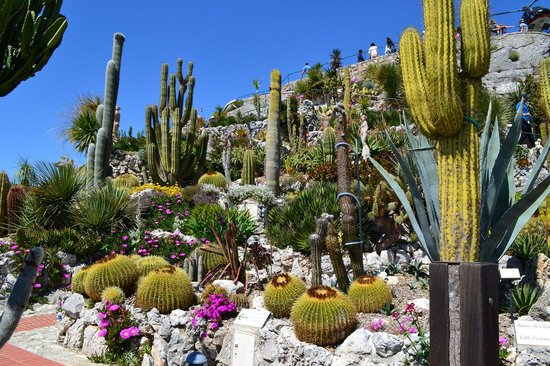 piante esotiche - Picture of Le Jardin exotique d'Eze, Eze ...