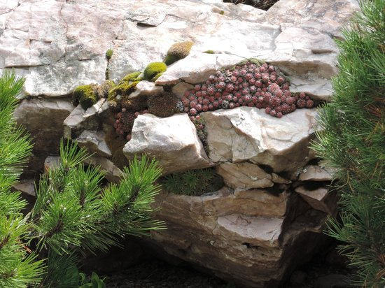 the rocks picture of betty ford alpine gardens vail tripadvisor. Cars Review. Best American Auto & Cars Review