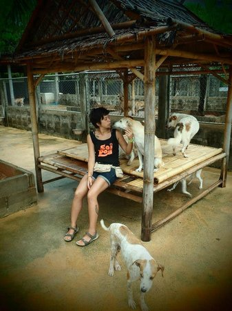 My boy Gaius from Soi Dog! - Picture of Soi Dog Foundation ...