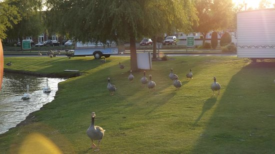 Chased By Geese Picture Of Southview Leisure Park Park Resorts Skegness Tripadvisor