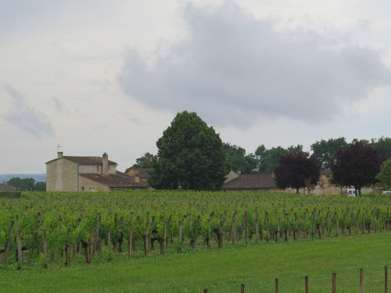 Great place for honey sweet wines picture of bordeaux 360 wine tasting to - Direct location bordeaux ...