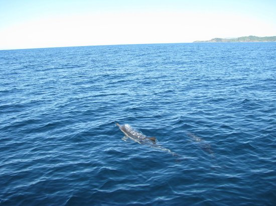 Dolphin dancing around the boat picture of port macquarie new south wales tripadvisor - Best western port macquarie ...