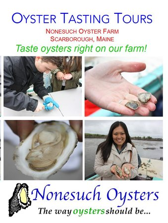 Nonesuch Oysters
