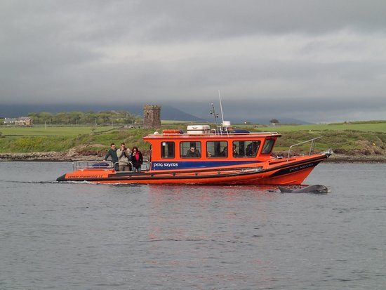 Dingle Bay Speed Boat Tours & Great Blasket Island Experience