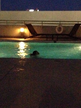 Omni Jacksonville Hotel: Relaxing at night swimming gym located here too guys were in there it was nice too