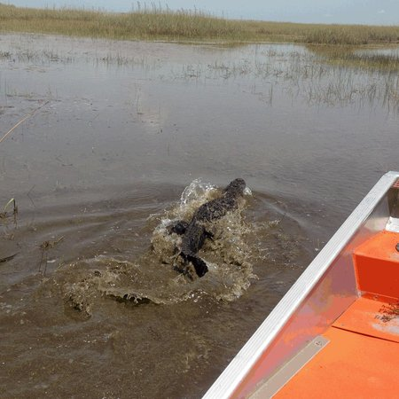 Blackwater Airboat Tours