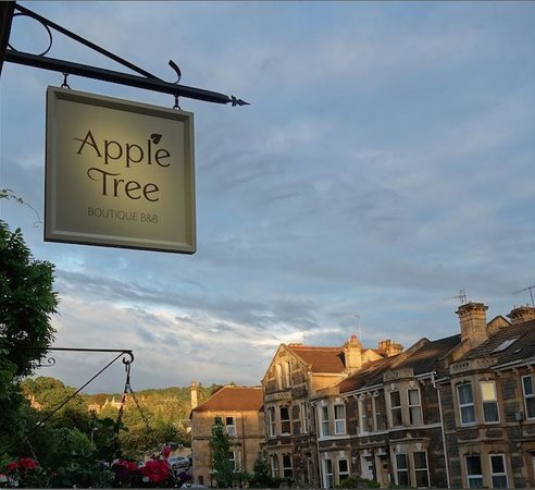 ‪Apple Tree, Bath‬