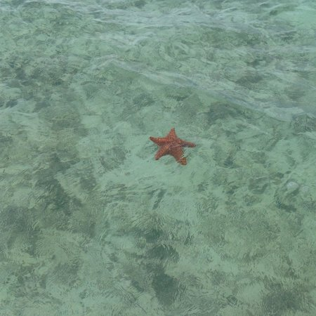 Parrot Cay: Seeing starfish during the snorkeling excursion