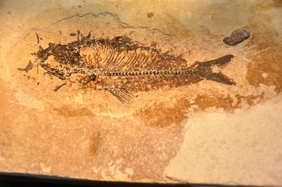Ulrich's Fossil Gallery