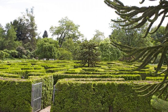 Vandusen botanical garden photo maze with a monkey puzzle tree in the