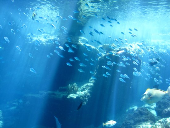 巨大水槽 - Picture of Okinawa Churaumi Aquarium, Motobu-cho - TripAdvisor