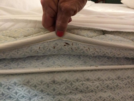 Report Hotels With Bed Bugs