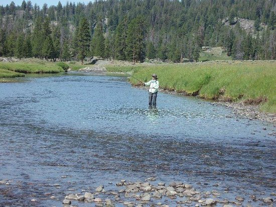 Fly fishing slough creek for Yellowstone park fishing report