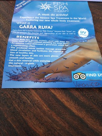 Info on fish spa picture of fish spa mexico playa del for Fish spa near me