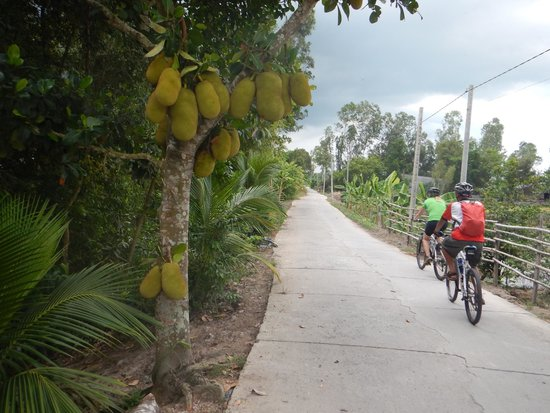 Vietnam Backroads - Bicycle Tours: A typical cycling road.  I've never seen jack fruit so big!