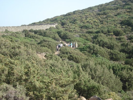 Patouhia Sifnos Alternatives