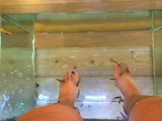Cute little fish picture of athens fish spa massage and for Fish pedicure locations near me