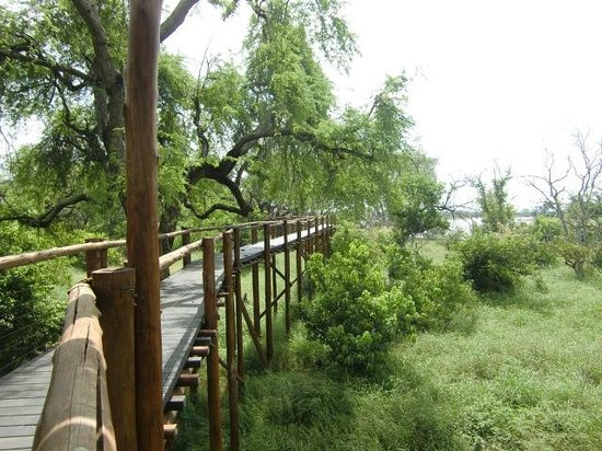 Musina South Africa  City pictures : Musina, South Africa: Tree top walk boven het stroomgebied van de ...